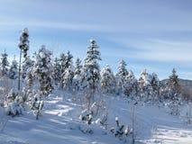 Snowy-Winterholz lizenzfreies stockfoto