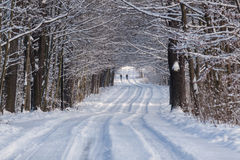 Snowy winterpath with jogger Royalty Free Stock Photo