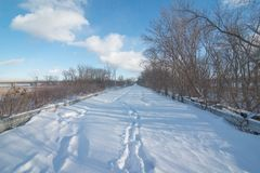 Snowy wintery nature forest foot path through forest - used to be a road - cross country skiing, hiking, fat tire bike recreation royalty free stock photo