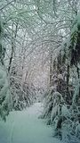 Snowy Wonderland. Snowy path on a wintery day stock images
