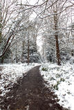 Snowy Woodland. Path through a Snowy Woodland Stock Photo