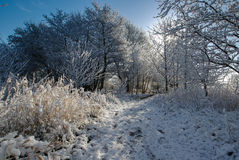 Snowy woodland path Stock Images