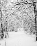 Snowy Woods. Black and white image of snow on a canopy of branches over a ski trail Royalty Free Stock Photo