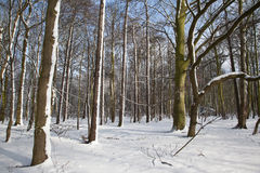 Snowy Woods Stock Photo