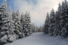 Snowy Woods. A beautiful snowy landscape in the mountains Royalty Free Stock Photos