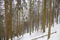 Snowy woods Stock Photos