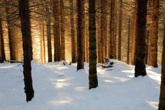 Snowy woods Royalty Free Stock Image