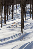 Snowy Woods. With deep shadows Stock Photo
