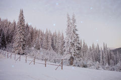 Snowy woods. With stars and mountain in the background Stock Photo