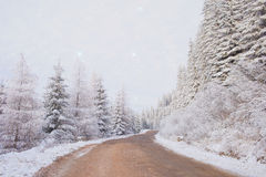 Snowy woods. With stars and mountain road Stock Photography