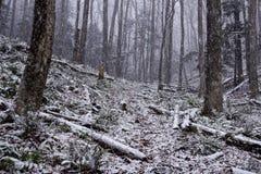Snowy Woods Trail Stock Photos