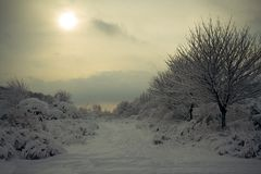 Snowy world. Beautiful snowy landscape Stock Photos