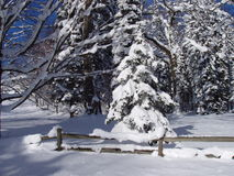 Snowy Yard. Winter scene of a snowy yard with a wooden fence and snow-covered trees Stock Image