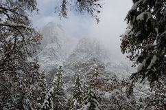 Snowy Yosemite Point Tree Frame. Snowy mountain peaks framed by snow covered trees.  Yosemite National Park, California, in winter.  Mountain peaks with blue sky royalty free stock photography