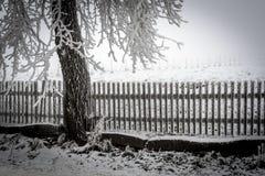 Snowy-Zaun mit einem Baum im Winter Lizenzfreies Stockbild