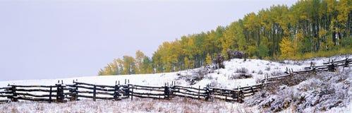 Snowy-Zaun und Espen Lizenzfreie Stockfotografie