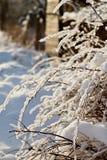 Snowy-Zweige Stockfoto