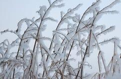 Snowy-Zweige von Büschen Stockfotos