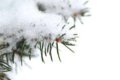 Snowy-Zweighintergrund Lizenzfreie Stockfotografie
