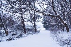 SnowyStreet Royalty Free Stock Image