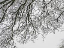 SnowyTreetakken royalty-vrije stock fotografie