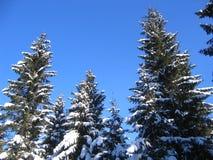 Snowytreetops stockfotografie