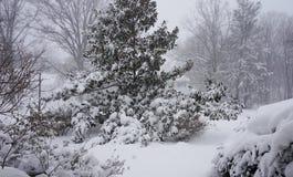 The snowzilla Jonas blizzard snow winter storm on January 23, 2016 Royalty Free Stock Image