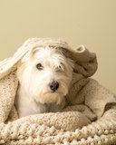 Snuggling Dog royalty free stock photography