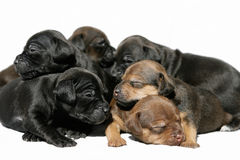 Snuggling puppies Stock Photo