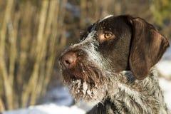 Snuit dichte omhooggaand in sneeuw royalty-vrije stock foto's