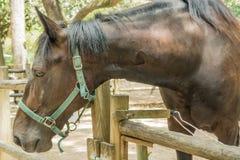 Snuit van paard Stock Foto's