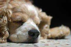 So Sleepy Stock Images