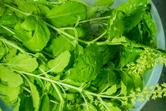 Soaked basil in a bowl Royalty Free Stock Images