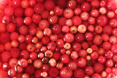 Soaked cowberry background Stock Images