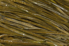 Soaked sea spaghetti Royalty Free Stock Photos
