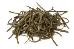 Soaked sea spaghetti Stock Photography