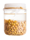 Soaked Sprouting Lentils Royalty Free Stock Images