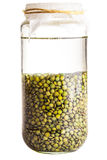 Soaked Sprouting Seeds (green Lentils) Stock Image