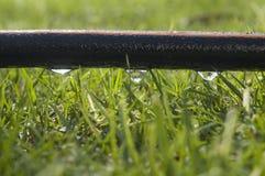 soaker шланга Стоковая Фотография RF