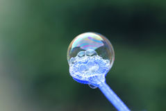 Free Soap Bubble Royalty Free Stock Image - 2041726