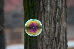 Soap Bubble. A soap bubble floating in the air stock images