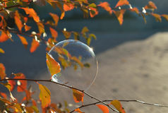 A soap bubble on a branch with red leaves beautifully shimmers in the sun. A soap bubble on the branch with red leaves beautifully shimmers in the sun stock images