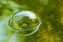 Soap bubble floating on water Stock Photography