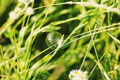 Soap bubble on a grass Stock Image