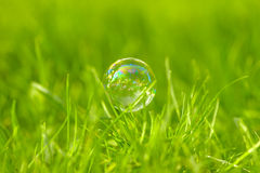 Soap Bubble on Grass. Soap Bubble on green bright grass Royalty Free Stock Images