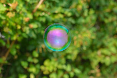 Soap bubble on green background at sunny day Royalty Free Stock Photo