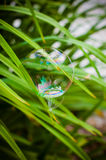 Soap bubble. On the green leaf Royalty Free Stock Photography