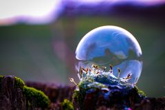 Soap bubble in the green Stock Image