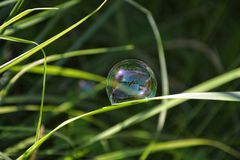 A soap bubble hanging on a blade of grass outdoors Royalty Free Stock Photo