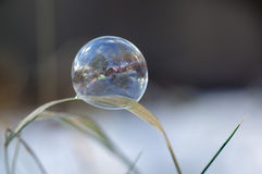 Soap bubble like a mirror - close up Stock Photography